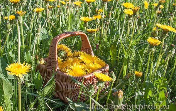 Корзинка с цветами одуванчиков
